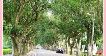 【秋❤雲林】優美宜人的林蔭大道。古坑綠色隧道 x 蜜蜂故事館