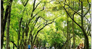 [遊。宜蘭羅東] 羅東林業園區  懷舊木造車站  唯美森林鐵道    來這裡大口呼吸吧