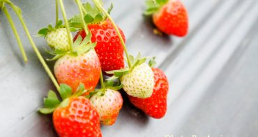 [清香農場採莓趣]~~採果踏青  多種享受一次滿足
