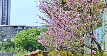 [土城 賞櫻] 希望之河 搭捷運來個賞櫻花輕旅行 市區裡最美的粉紅河道 2017櫻花花況