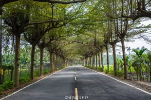  屏東‧潮州 泗林健走步道,一公里長的小葉欖仁綠色隧道