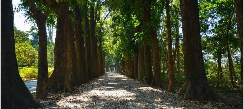 |高雄‧六龜|跟著我一起到新威森林公園吸收芬多精吧