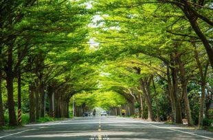  台南‧學甲 炎炎夏日,來174縣道避暑去*全台最美的小葉欖仁綠色隧道
