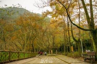 |桃園‧大溪|楓葉漸紅,漫步在槭林步道與楓林小徑,感受不一樣季節的石門水庫