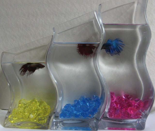 Betta fish tanks diy diy betta fish tanks for pinterest for How to make ice in a fish tank