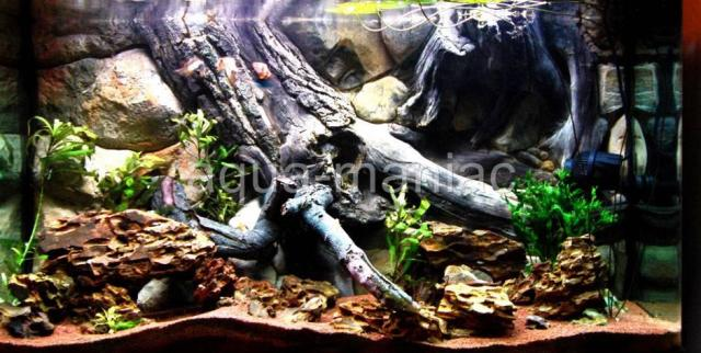 Details about AQUARIUM FISH TANK BACKGROUND 3D AMAZON ROOT FIT TANK