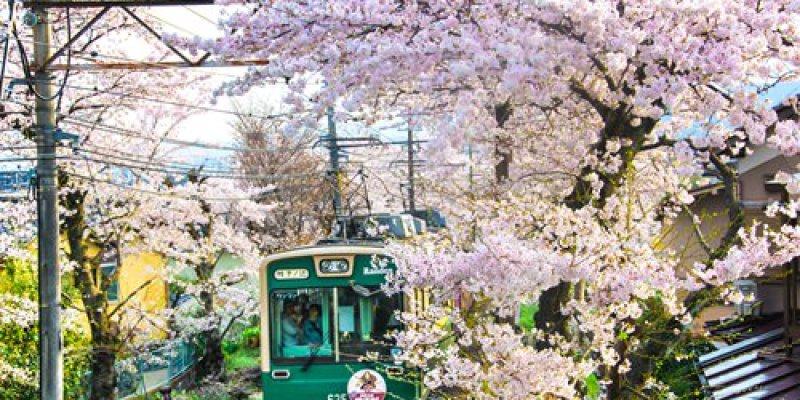 【日本】。2015日本櫻花開花情報站.櫻花預測.櫻花季景點推薦