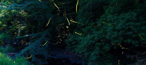 【九州】。佐賀看螢火蟲~小城市祇園川、武雄溫泉保養村、嬉野川@在日本拍螢火蟲