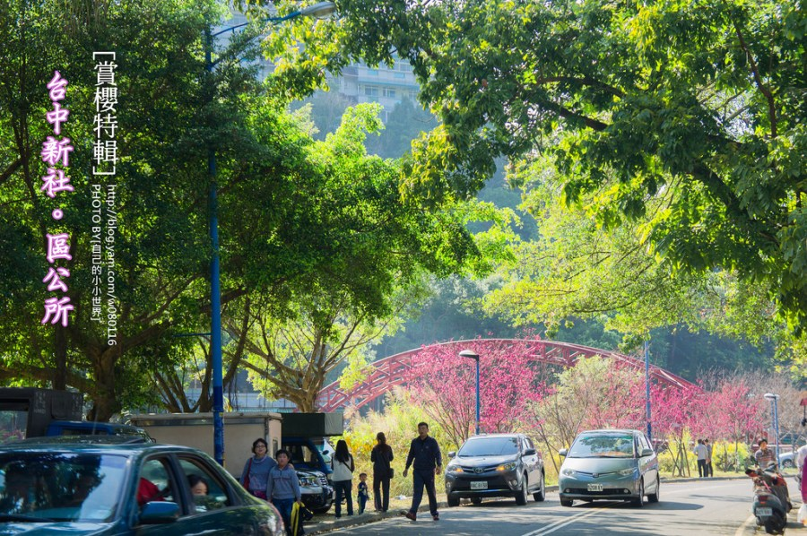 【台中】。櫻花超夯景點小旅行 新社區公所櫻花盛開