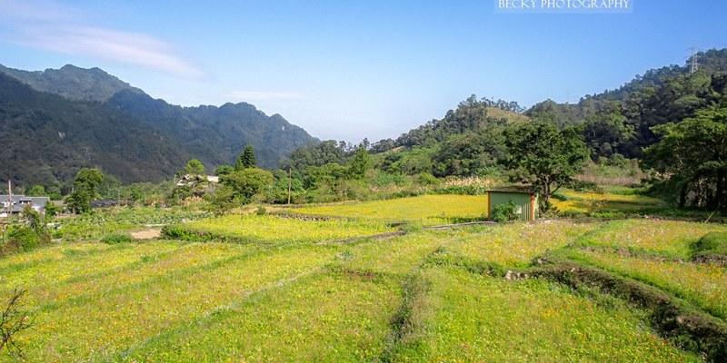 【苗栗】。不一樣的『南庄一日遊』蓬萊花海秘境拔蘿蔔、DIY客家蘿蔔糕 │蓬萊社區