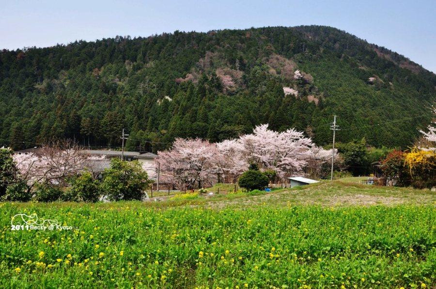 【京都】。秋の寂靜~大原三千院