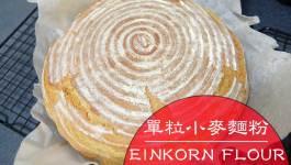Einkorn Wheat單粒小麥|穿越時空玩古老小麥麵粉與簡述我對添加物的看法