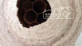 住家內外有蜜蜂或虎頭蜂來築巢該怎麼辦?–五個消防隊員來摘一顆小蜂窩
