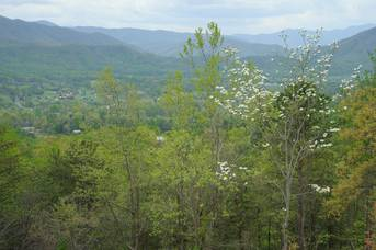 Taken at A View To A Thrill in Wears Valley TN
