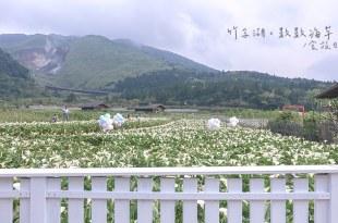 [旅遊] 陽明山竹子湖海芋季,2019數數海芋,綠白相間的幽美