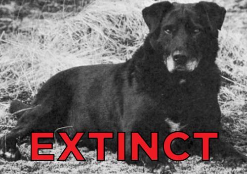 Medium Of Extinct Dog Breeds