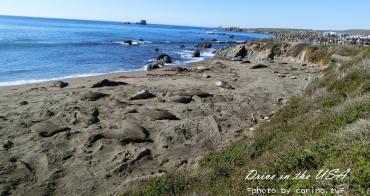 美西自駕景點|加州一號公路『Piedras Blancas海象灘』超多躺在沙灘上做日光浴懶洋洋的海獅群