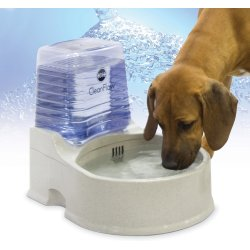 Small Crop Of Dog Water Bowl