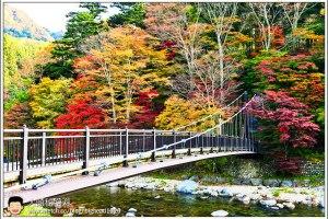 [日本關東楓紅之旅5-1]塩原溫泉:紅葉吊橋、小太郎之淵、七ツ岩吊橋、不動吊橋
