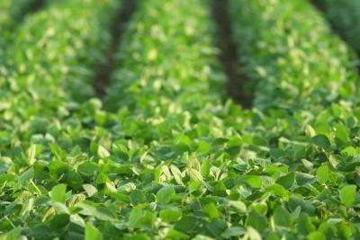 Eat soybeans on a regular basis.