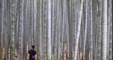 釜山|九頭山竹林 아홉산숲 -  韓國電視劇拍攝景點,走進釜山美麗的竹林深處