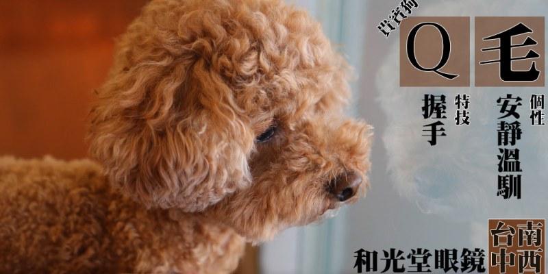 寵物毛小孩 靠近安平眼鏡行裡藏店狗,Q毛的毛Q軟超好摸 台南市中西區|貴賓狗-Q mo-和光堂眼鏡