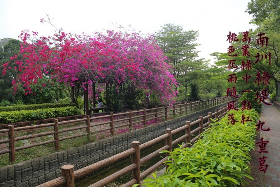 台南 萬叢綠中一點紅,大圳兩端遙相往,桃色花雨隨風落 台南市新化區|南圳綠堤堤岸公園