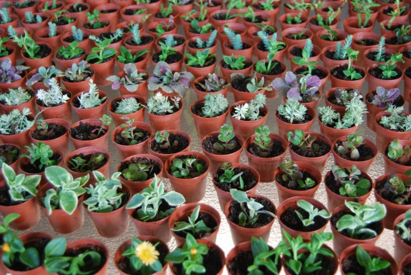 Large Of Miniature Fairy Gardens