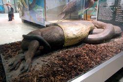 Anaconda-verde a devorar um capibara, escultura exibida no Senckenberg Museum em Frankfurt am Main