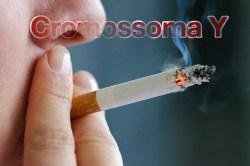 Fumar apaga o cromossoma Y em homens