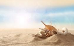 Sand Areia Wallpaper é ao Domingo FCiências 5