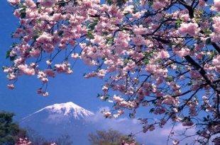 【一個人旅行】富士五湖(河口湖)+福島(會津若松+只見線) 行程筆記分享♥
