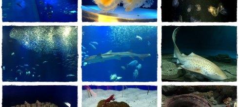 【一個人旅行】茨城賞花快閃DAY1 風大又冷只好躲進大洗水族館看鯊魚?