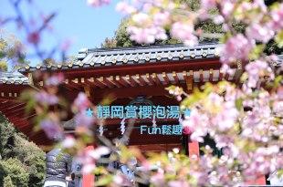 2017 久違的家族旅行ღ靜岡賞河津櫻🌸爽爽泡湯♨速記心得