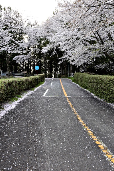 福岛核电站 路牌