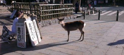 【一個人旅行】關西生日好忙之旅-DAY3 奈良看小鹿→大阪血拼
