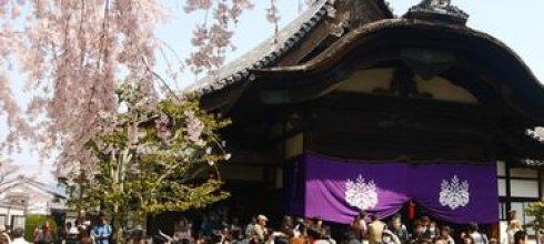 【熱血背包女】***2013關西賞櫻DAY3 醍醐寺→金閣寺→平野神社