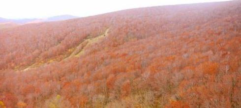 【熱血背包女】日本東北紅葉之旅Day2(上篇) 搭JR bus上奧入瀨溪囉~八甲田纜車&山岳美景