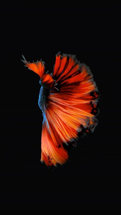 How to Get Apple's Live Fish Wallpapers Back on Your iPhone « iOS & iPhone :: Gadget Hacks