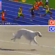 【おもしろ】100mでウサイン・ボルトに勝てる犬種は・・・?