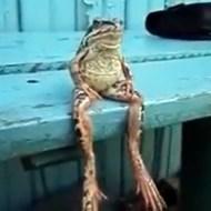 【萌え動画:カエル】哀愁があり過ぎるカエル(42)が発見されるwww