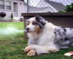 【おもしろ動画:犬】飼い主に隠れて何をしてるかと思ったら・・・