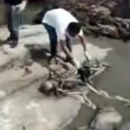 【グロ動画:死体】ピラニアに肉を食い尽くされた死体・・・