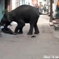 【閲覧注意】街で象が大暴れ!人間なんか人形みたいに飛ばされてる;