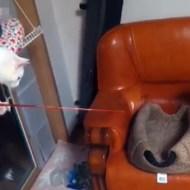 【おもしろ】おもちゃで猫釣りをする・・・猫w