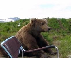 【衝撃映像】隣で馬鹿デカイ熊がくつろいでる!助けて!