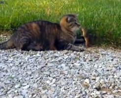 【衝撃】猫VSリス(AGI極振り)の戦いがスゴイと話題にw