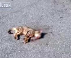 【閲覧注意】車で轢いた猫を瀕死の状態から死ぬまでを撮影・・・