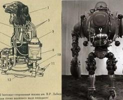【閲覧注意】犬の首を切断し、「ロボット」にするという計画