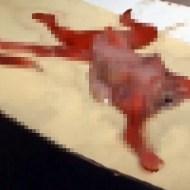 【グロ動画】下水道で発見されたのは首のない胎児・・・